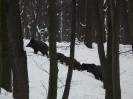 Téli táj_5