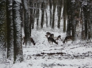 Téli táj_6