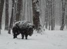 Vadászterület télen